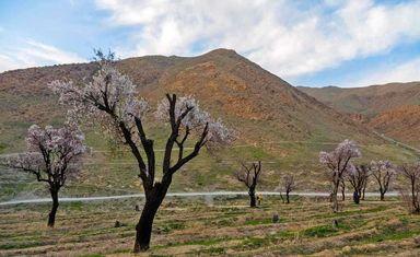 طبیعت بهاری روستایی به نام گردو