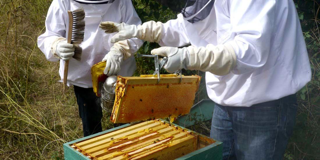 قیمت کندو عسل سال 95 هشدار درباره عرضه عسلهای تقلبی | اقتصاد آنلاین