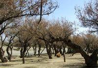 ممنوعیت صادرات خاکهای مرتعی و جنگلی