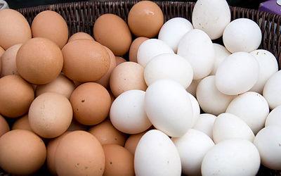 نتیجه تصویری برای تخم مرغ غیر بهداشتی